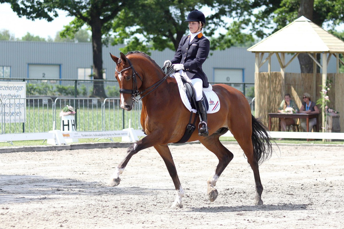 Inge Coenen Dressage Event [ICDE.NL]