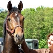 Inkoop en verkoop van getalenteerde dressuurpaarden in Nederland