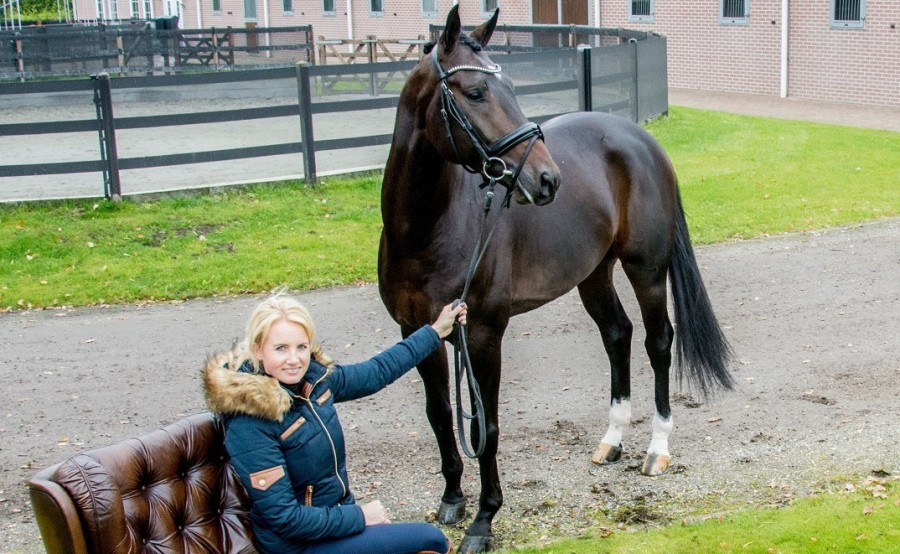 Beoordelen jonge paardenwedstrijd