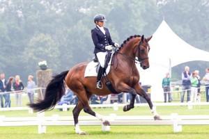 getalenteerde Dressuur paarden