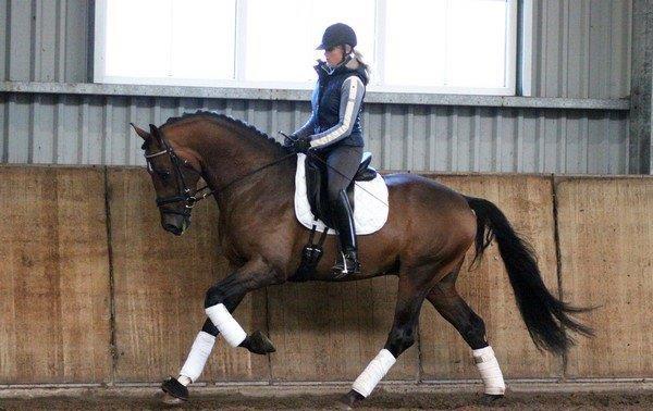Trainen en opleiden van dressuur paarden